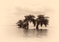 Antiqued,  Blue Cypress Lk